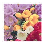 Ti-flair Matservett Freesia