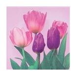 Ti-flair Matservett Tulips on Pink rosa