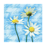 Ti-flair Matservett Blooming Daisies Blue