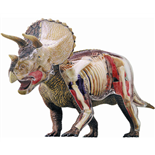 4D Vision Triceratops Anatomy Model Deluxe 35 cm