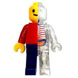 4D Master Anatomy Brickman