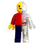 4D Master Anatomy Brickman 13 cm