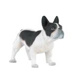 Papo Bulldog Svart/Vit Hund