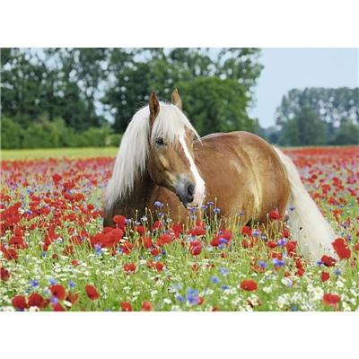Ravensburger Pussel 500 Bitar Horse in the Poppy Field, 148318