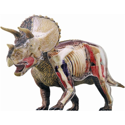 4D Vision Triceratops Anatomy Model Deluxe 35 cm, 26652